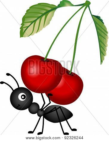Ant carrying a red cherries