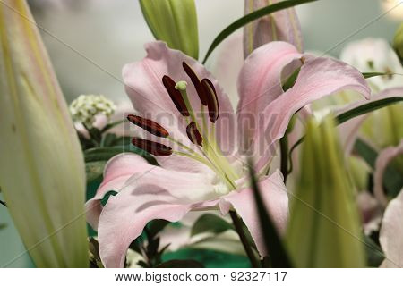 Beautiful Lilium, Liliaceae flower