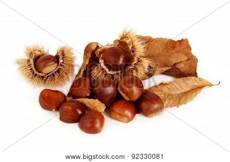 Chestnuts, dried leaves and husk.