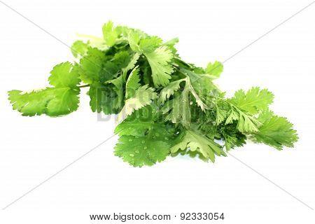 Green Bunch Of Coriander