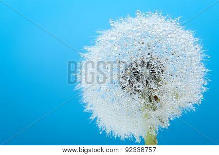 Wish Flower Dandelion - Stock Image