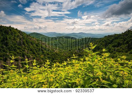 Appalachian Mountains Summer Asheville North Carolina Blue Ridge Parkway