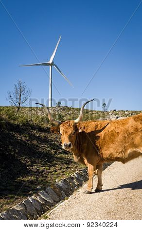 Wind Turbine - Stock Image