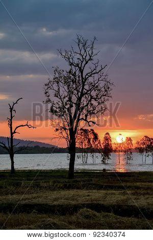 Fantastic silhouette tree in sun rise