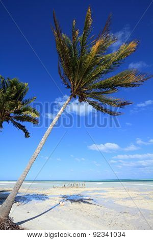 Cuba Palm Tree Beach