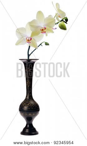 yellow orchid flower in black vase isolated on white background