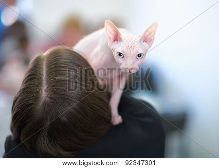 Hairless Sphynx Cat On The Shoulder Of The Hairy Owner