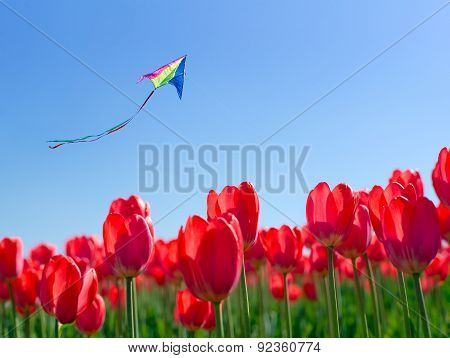 Kite Soars Into The Sky Over The Flowers