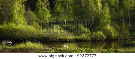 two swans in an old beautiful nature surrounding, Sweden