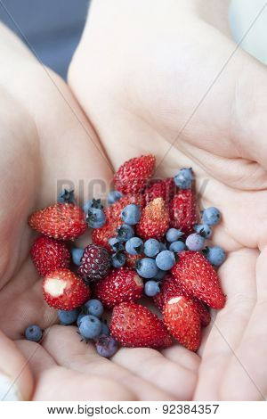 Hands holding freshly picked wild strawberries and blueberries