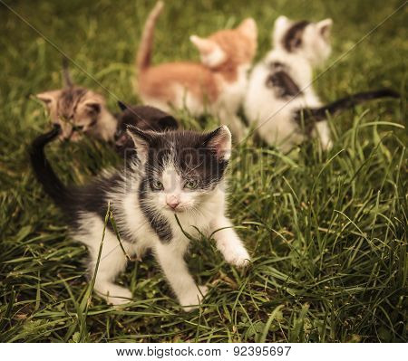 small group of baby cats playing in the grass