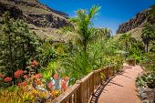 pic of spiky plants  - Path through the tropical plants garden in Palmitos Park in Gran Canaria - JPG