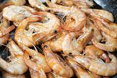 pic of tiger prawn  - prawns of the mediterranean cooked in pan with white wine - JPG