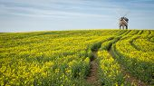 picture of rape  - Chesterton Mill pictures in rape seed field in leamington in the uk - JPG