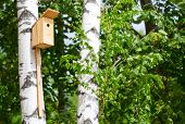 picture of nesting box  - nesting box on the tree in the park - JPG