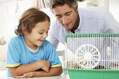 image of hamster  - Father And Son Watching Pet Hamster - JPG