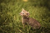 image of baby cat  - little baby cat looking very sad while staning in a grass field - JPG