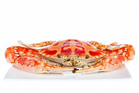 foto of cooked blue crab  - Delicious cooked hot steamed blue crab on a plateisolated on white background shot in studio - JPG