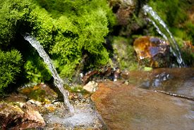 stock photo of groundwater  - source of spring water in a forest, fragment of wildlife
