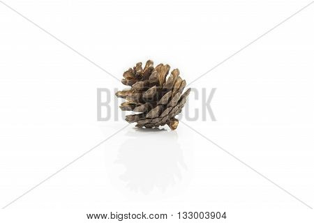 pine cone seed isolated on white background