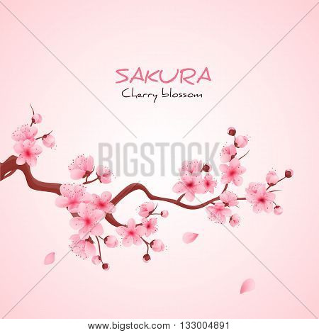 Vector illustration sakura cherry, branch with blooming flowers, Japan flowers
