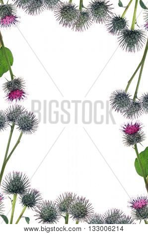 frame from greater burdock flowers isolated on white background