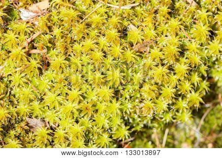 Closeup Of Green Moss
