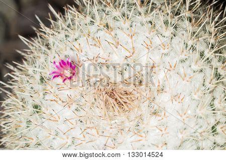 Cactus With Tiny Purple Flower
