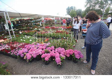 Floraart In Zagreb