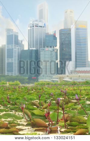 Floating water garden full of lilies near ArtScience Museum in center of Singapore with skyscrapers on background