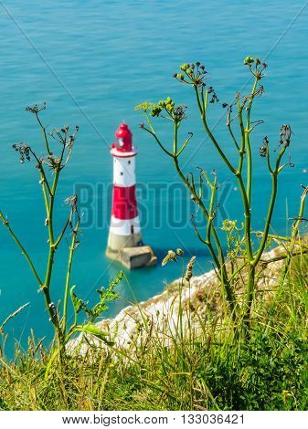 Wild flowers and Beachy Head Lighthouse as blured background. Eastbourne, East Sussex, England. Selective focus