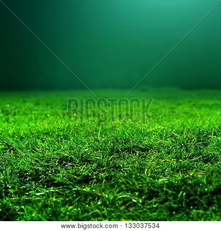 Natural green grass background with selective focus. Abstract natural background with beauty grass texture