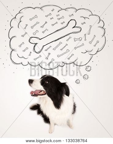 Cute black and white border collie sitting and dreaming about a bone in a thought bubble