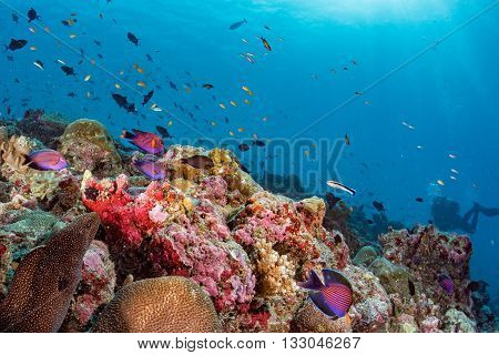 Maldives Corals House For Fishes Underwater View