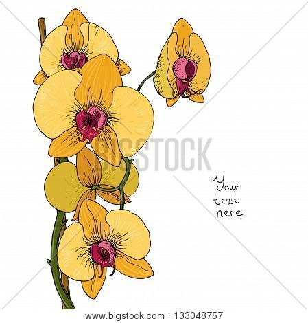 Flower of white orchid. Hand drawing isolated objects on white background. Vector illustration.