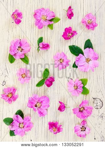Pink Flowers Dog-rose On Light Wooden Background.