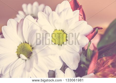 Bunch Of Flowers. Abstract Background Of Flowers. Close-up