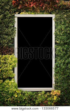 window frame and plant isolated on white color backgrond