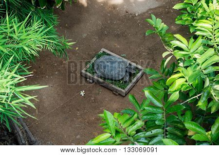 Turtles eat vegetables in the pan place the timber on the ground.