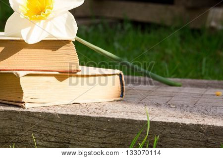 Summer pictures with an open book. Open book on the background of nature. Knowledge is power. Flowers in the book. Education. on the wooden table. Teacher's day. Empty space for text