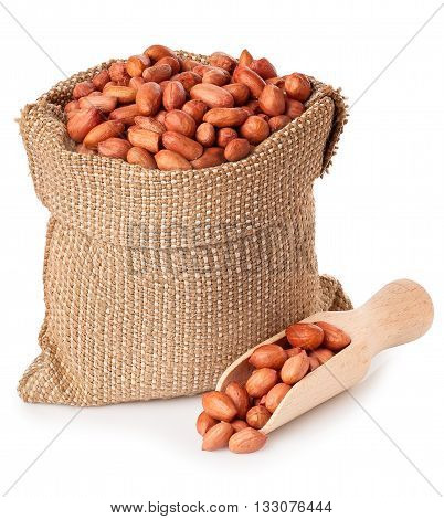 Peanut or groundnut with wooden scoop in burlap bag isolated on white background. Peanut in sack on white background. Full burlap bag of peanuts