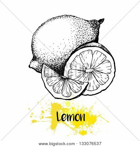 Vector hand drawn illustration of lemon or lime fruit. Engraving summer fresh citrus fruit isolated on white background. For cocktail smoothie desserts and salsds.