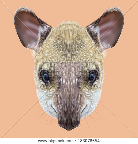 Illustrated Portrait of Tapir. Cute face of young wild Tapir on pink background.