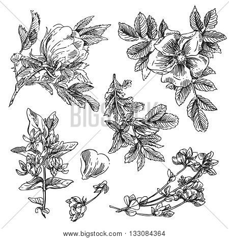 Beautiful hand drawn illustration boho flowers. Flowers for boho-style  wedding invitations. Decorative floral illustration with flowers of peonies.