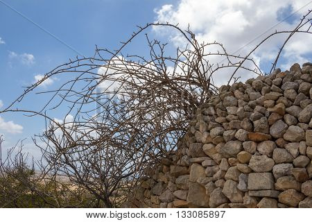 Fence made of stones picked from the field which the fence is lining. Wild bush in the spring still without leaves. Blue sky white clouds.