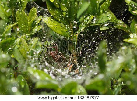 Spider In Rain