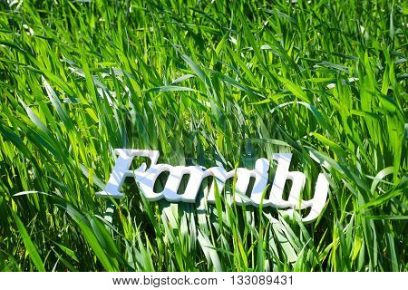 Wheat crops with word family, close up
