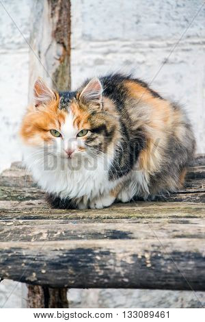 Cat on the banch in old village