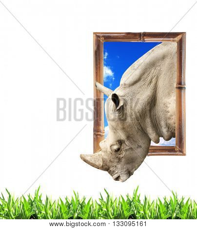 Rhinoceros in bamboo frame with 3d effect and green grass. Isolated on white background