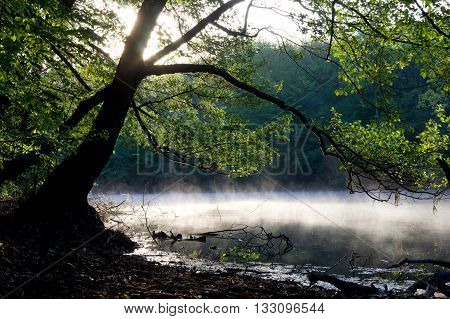 earlier morning on the river. Fog over the river